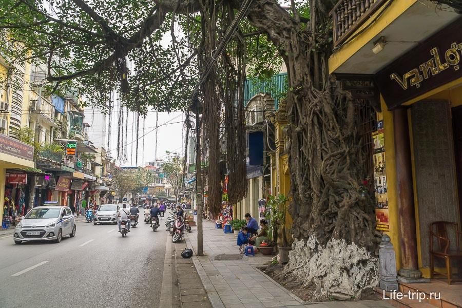 Красивое дерево, часть уличной стены