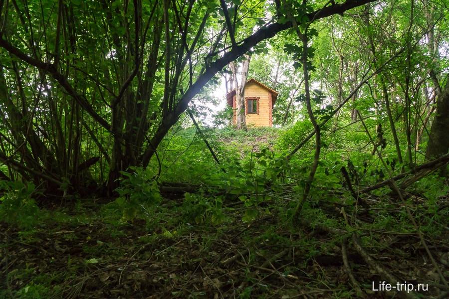 Вокруг лес