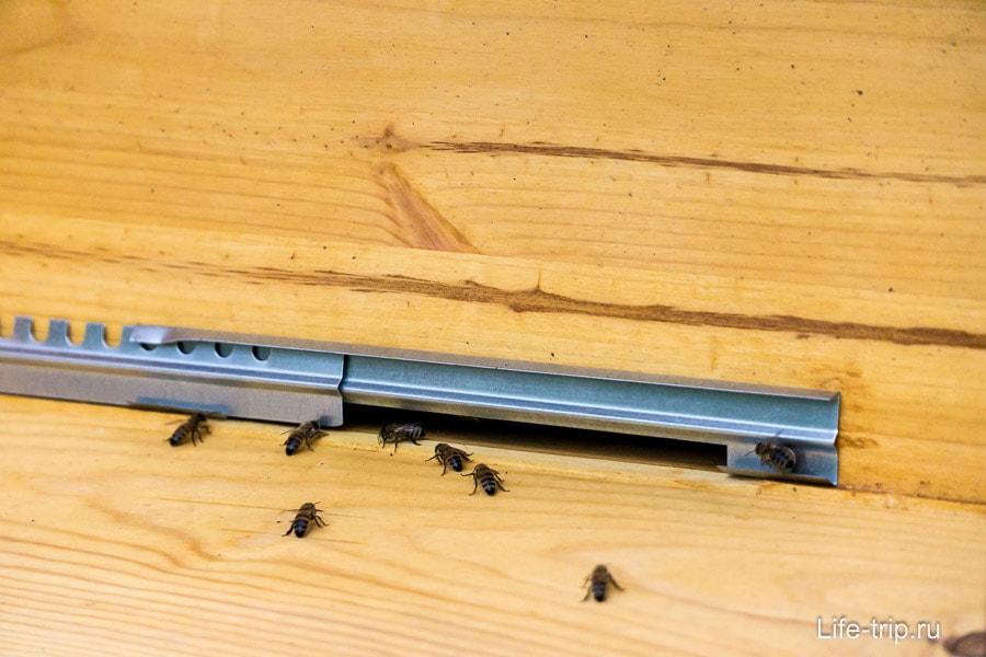 Пчелы могут залетать и вылетать только здесь