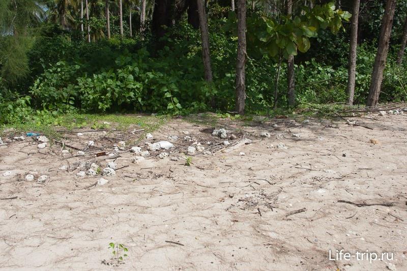 Ближе к левому краю, пляж становится не таким ровным и чистым.