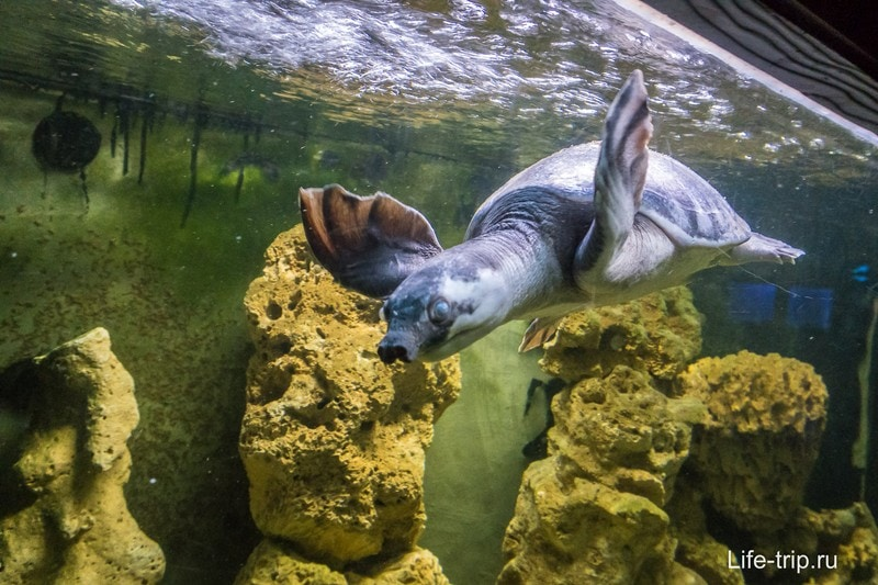 Черепахи с длинными шеями