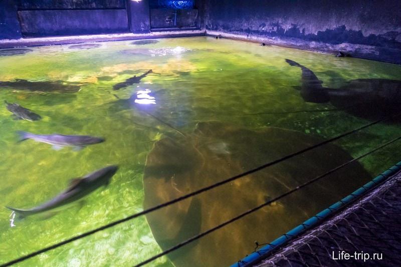 Есть несколько открытых аквариумов со скатами и рыбами