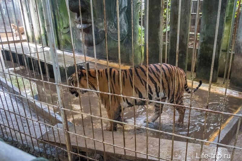 Аквариум и тигровый зоопарк на Самуи - грустно и дорого
