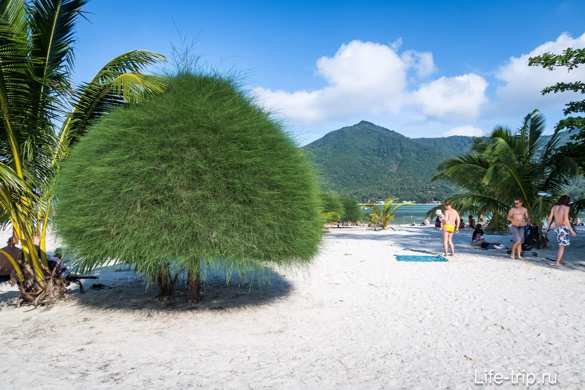 Панган пляж малибу фото