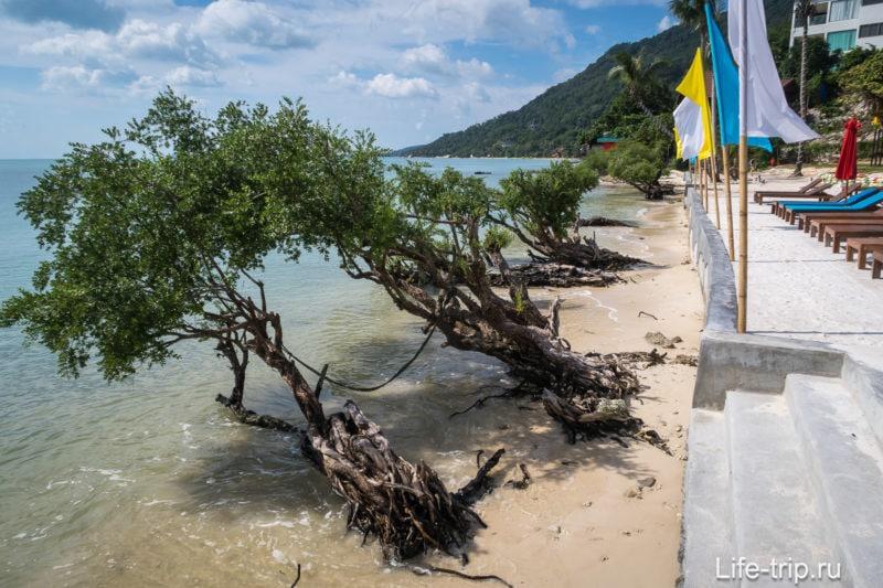 Вид вправо - мангры на пляже