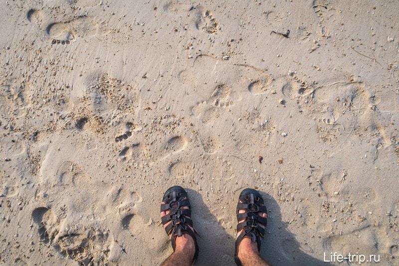 Песок, иголки казуарин и кораллы.