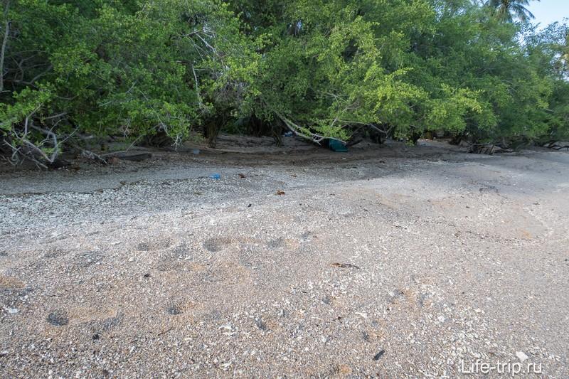 Во время прилива вода добирается до самых деревьев