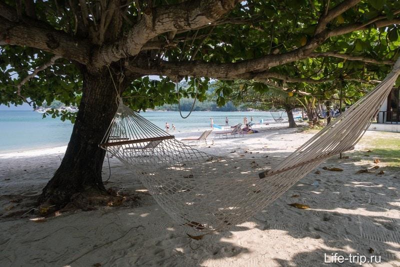 Деревья на левом краю пляжа. Обратите внимание на песочек - его причесали граблями.