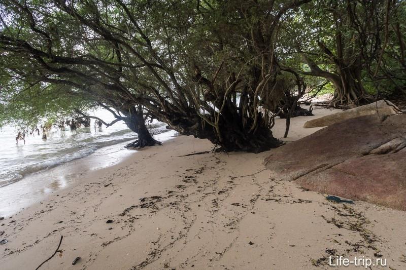 Кое-где придется проходить сквозь заросли мангровых деревьев