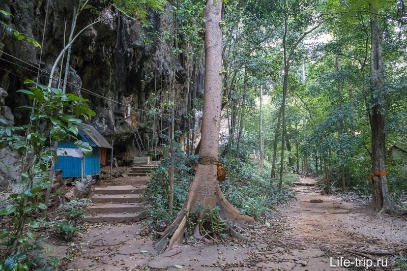 Если встречаешь оранжевую повязку на дереве или на палке - где-то рядом живет монах