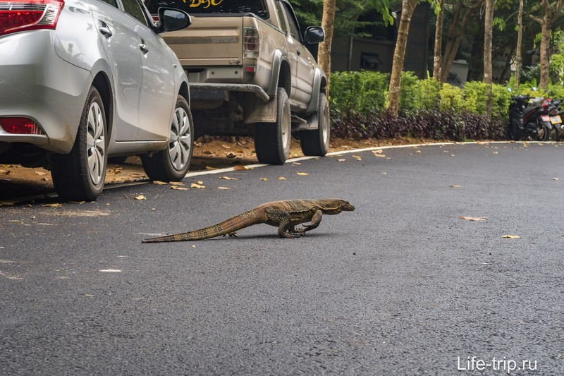 Будете парковаться - аккуратнее на дороге, чтобы вам ноги не оттоптали