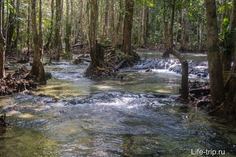 То ли лес растёт в реке