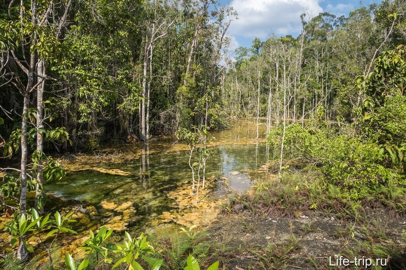 Иногда лес расступается, речка становится шире