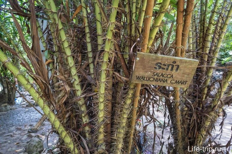 Местами попадается весьма угрожающая растительность