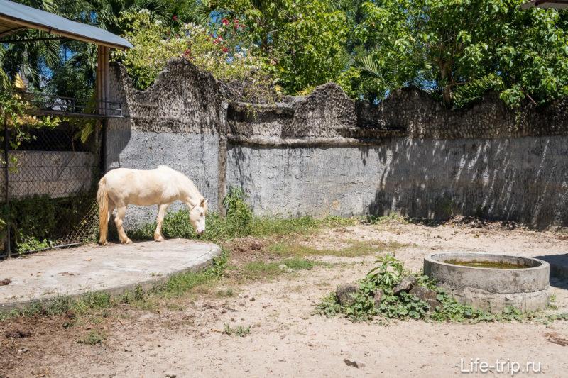 Зоопарк на Пхукете - мой отзыв, цены, фото и расписание шоу