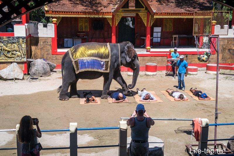 Шоу со слонами