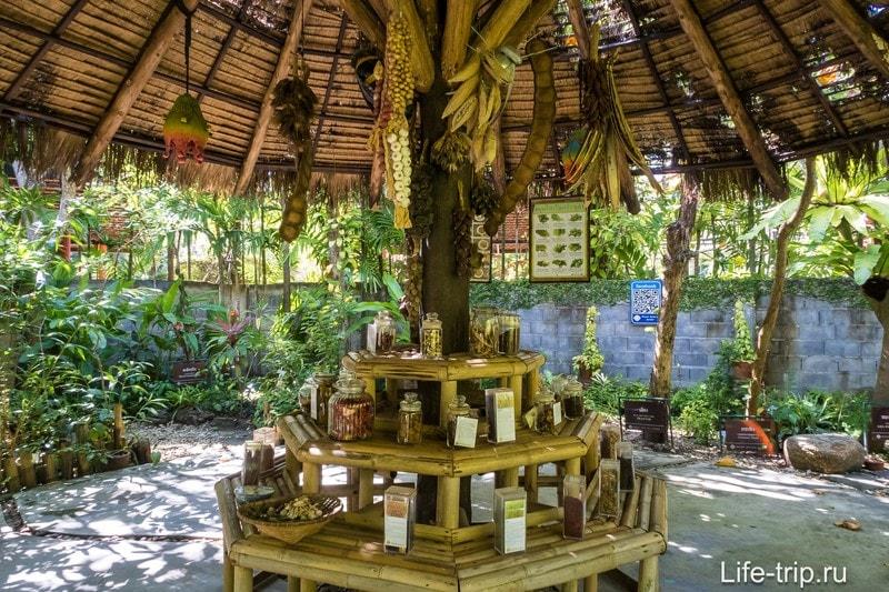 Ботанический сад на Пхукете - для любителей растений и селфи
