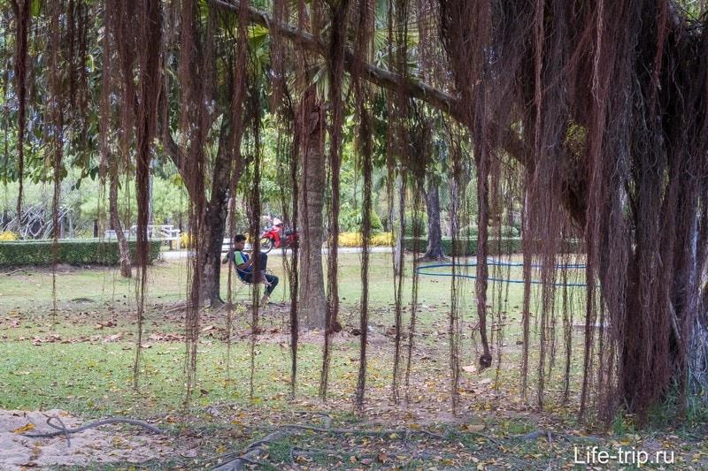 Королевский парк (Парк Рамы IX) - единственный парк на Пхукете