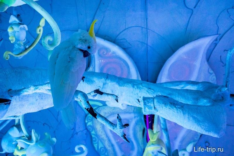 Называется найди белого попугая на белом фоне