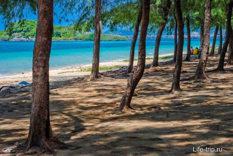 Казуариновая роща на пляже
