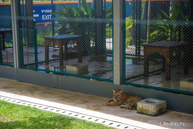 Вольер для тигрят