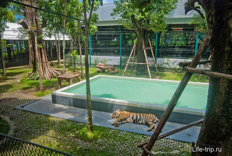 Зоопарк тигров в Паттайе - экзотические селфи с