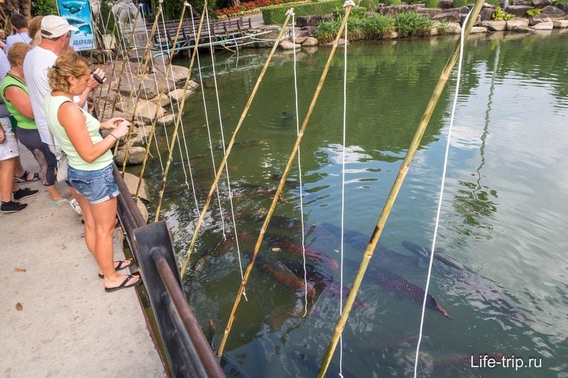 Можно покормить гигантских рыб