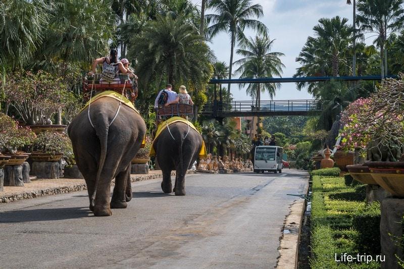 Можно покататься на слонах по территории