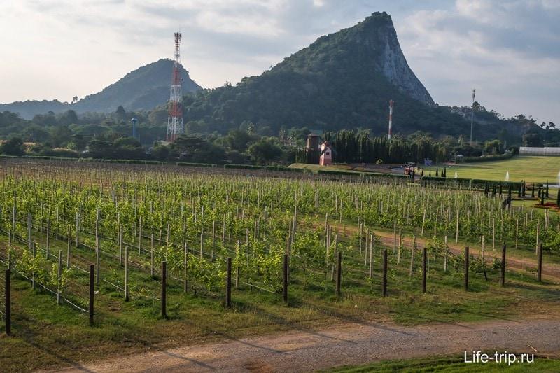 Гора Золотого Будды на фоне растущего винограда
