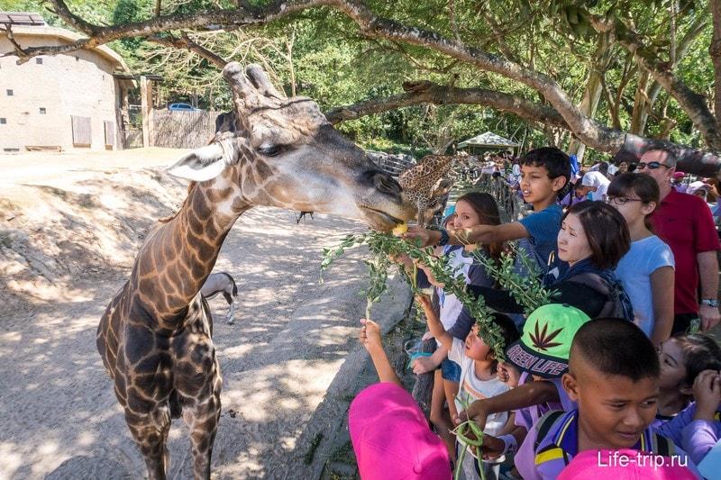 Контактный зоопарк Кхао Кхео