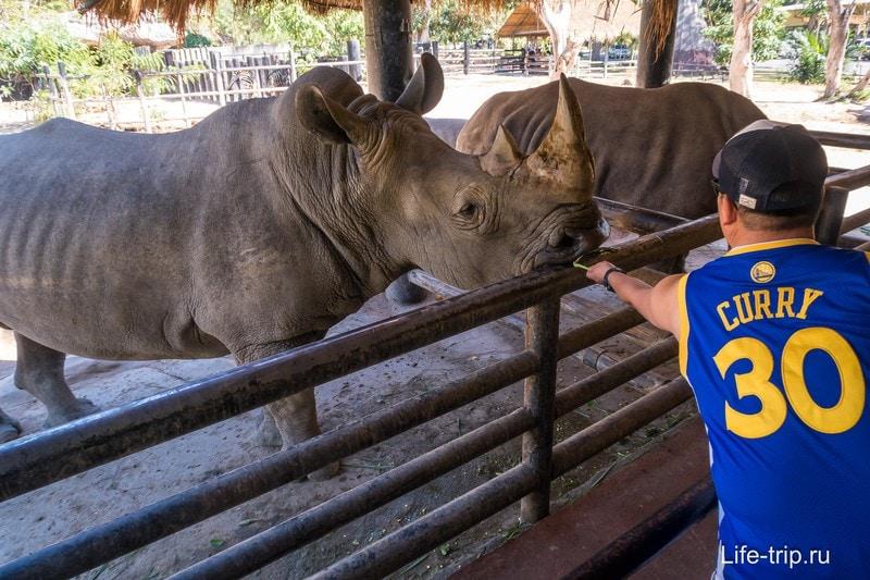 Можно кормить носорогов