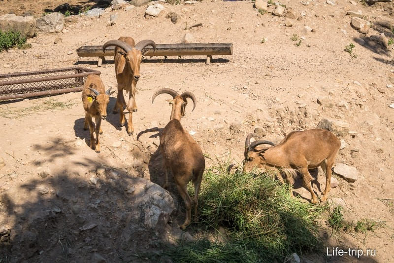 Зоопарк Кхао Кхео в Паттайе - лучший в Таиланде
