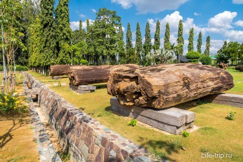 Стволы миллионолетних окаменелых деревьев
