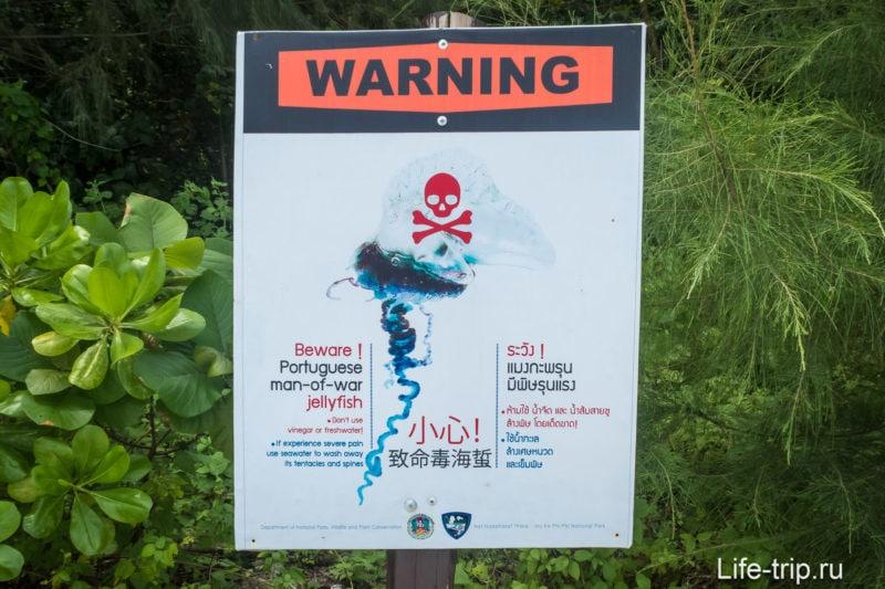 Предупреждение об смертельных медузах - португальский кораблик