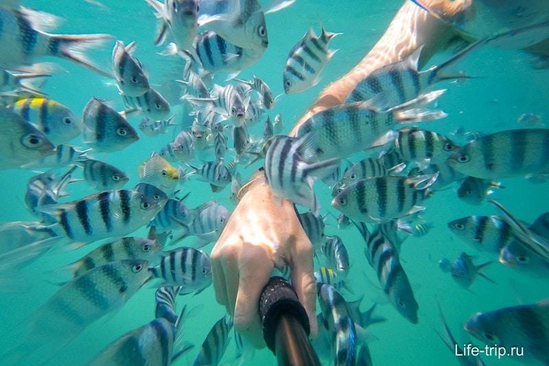 Рыбки самое интересное