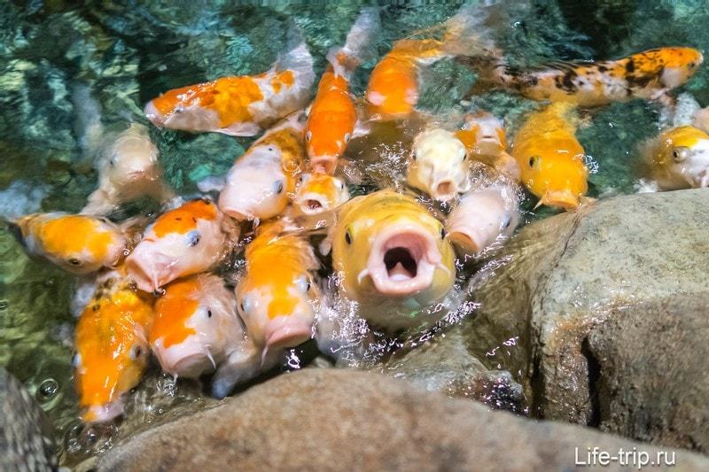Океанариум в Адлере - на удивление восторг и потрясение