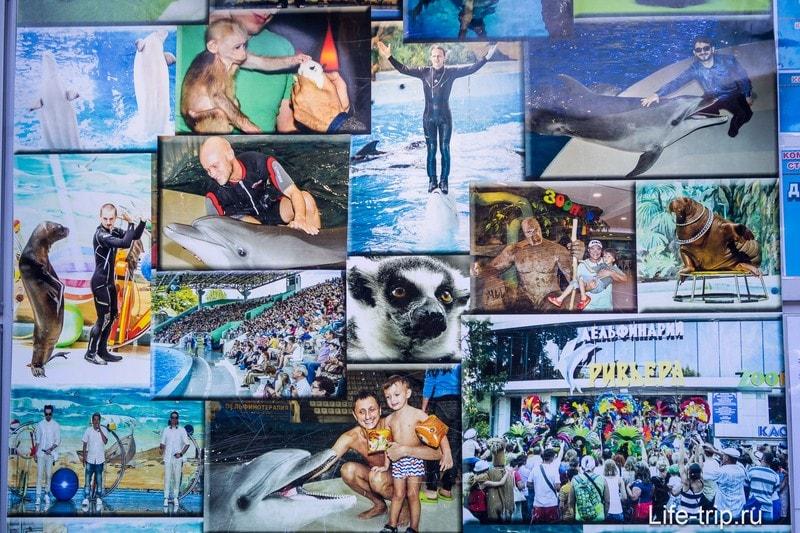 Дельфинарий Ривьера в Сочи - семейный отдых с дельфинами