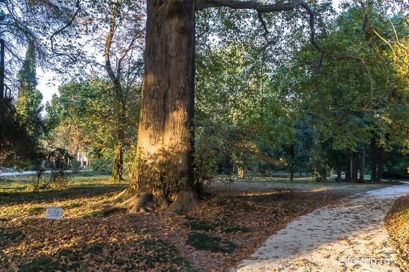 Парк Южные Культуры в Сочи