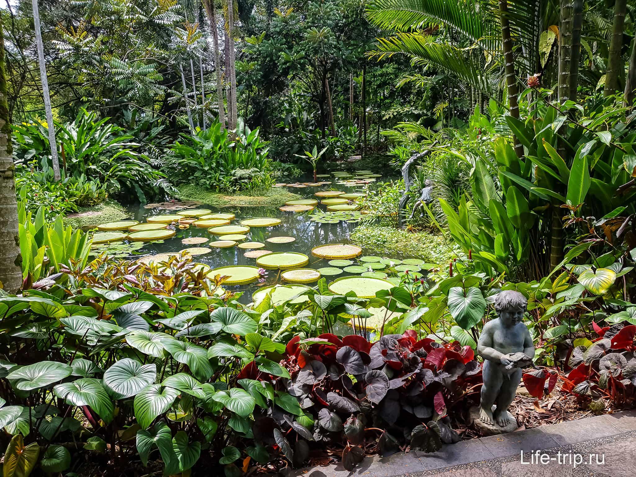 признала, сад орхидей в сингапуре фото мог