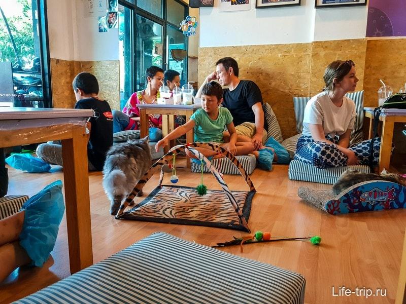 Кафе с кошками Catmosphere в Чиангмай