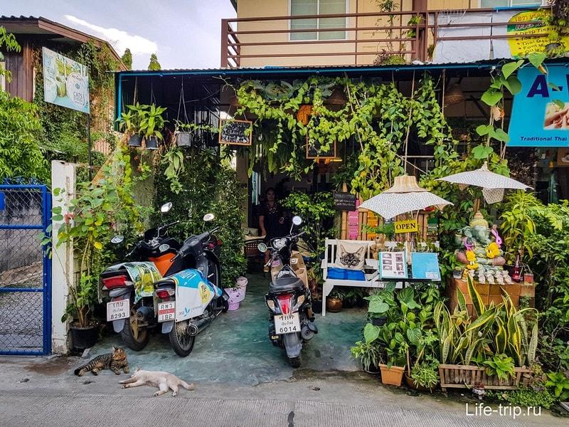 Кото кафе Cats station в Чиангмае