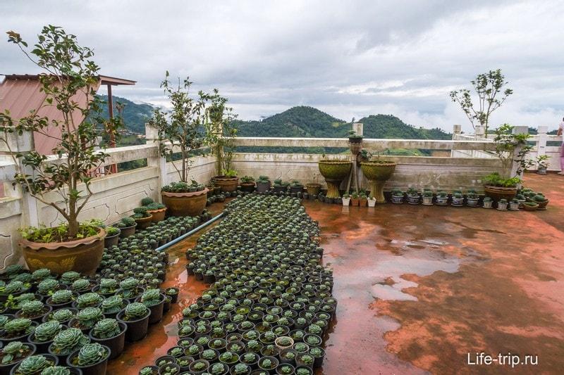 Садик кактусов на крыше ресторана