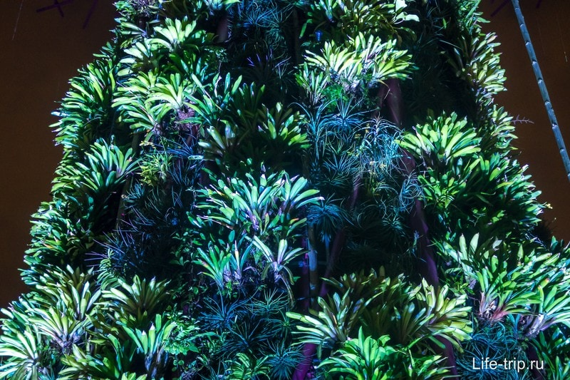 Растения, покрывающие супердеревья