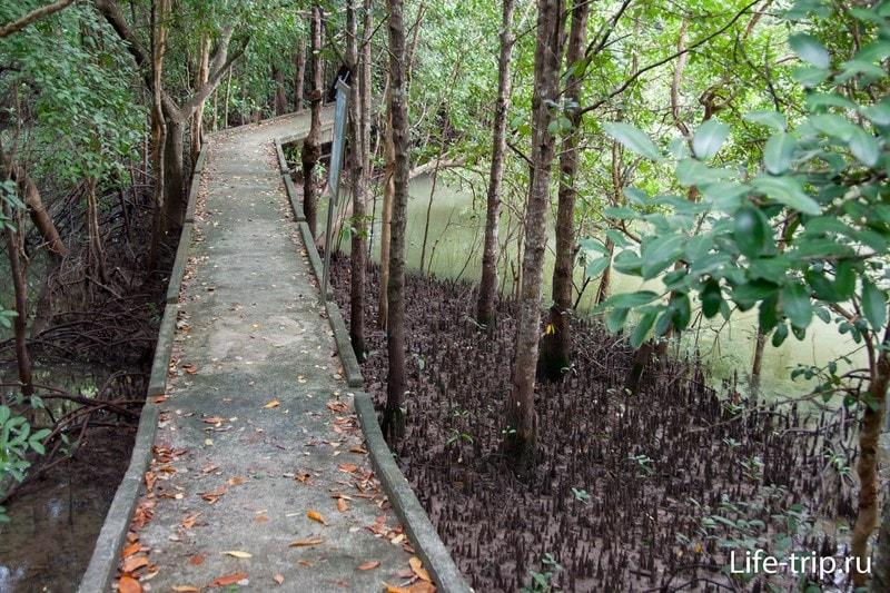 Тропа по мангровым зарослям