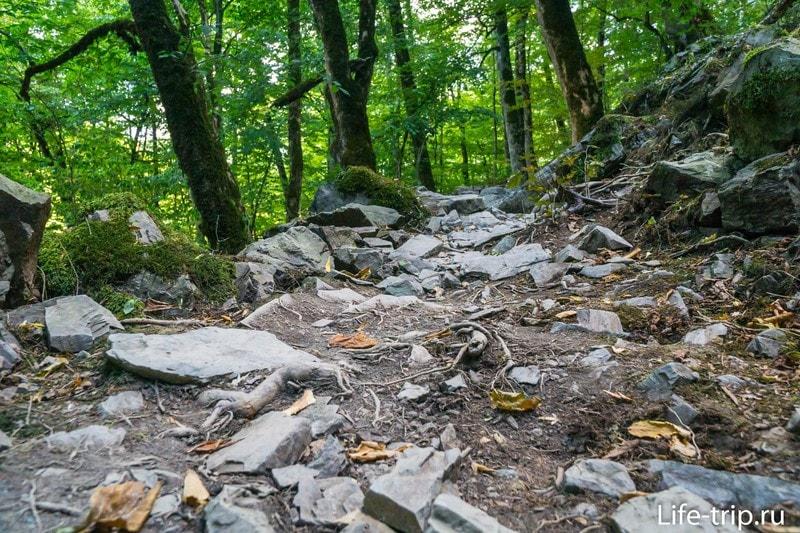 Тропа Здоровья в Роза Хутор - неспешная прогулка по лесу