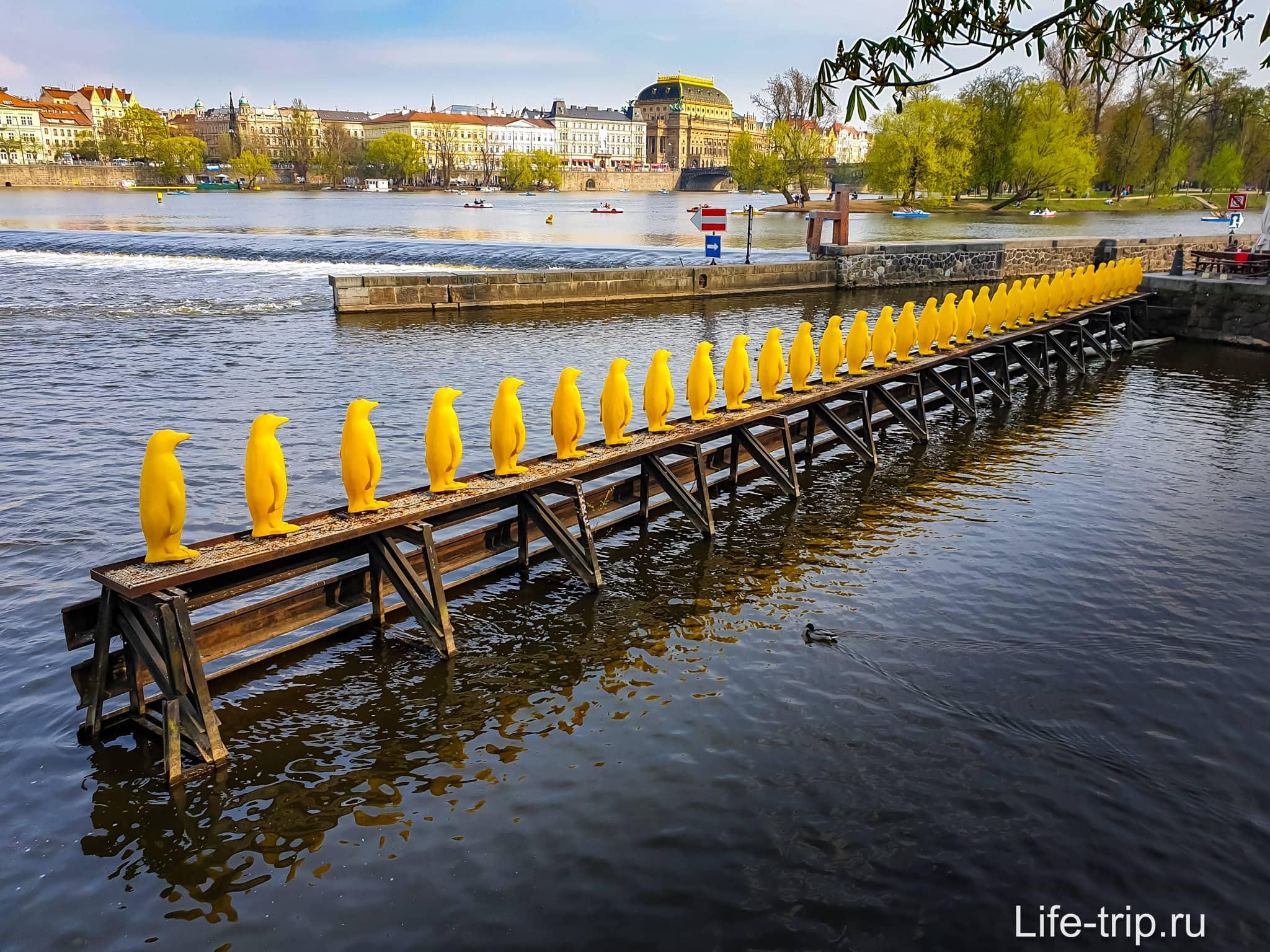 Марш пингвинов через Влтаву в Праге
