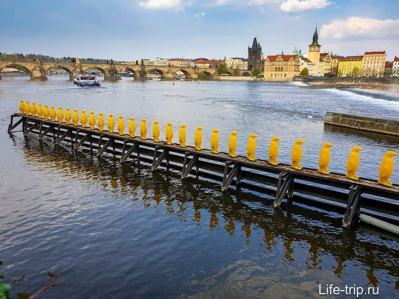 Марш пингвинов через Влтаву - желтые пингвины в Праге