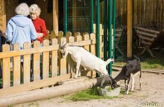 Трогательный зоопарк в Казани