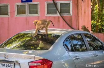 На Monkey Hill на Пхукете меня атаковали обезьяны