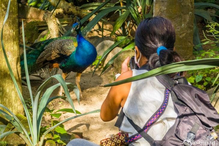 Bali Bird Park - парк птиц на Бали